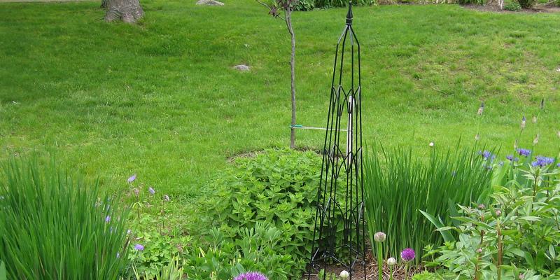 Gardenia Pests