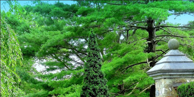 Nectarine Tree Pests